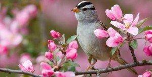 Primavera uccellino 300x152 - Home